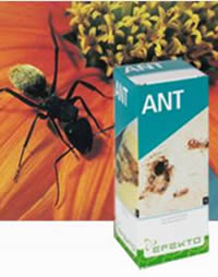 Efekto Ant for outdoor ant problems