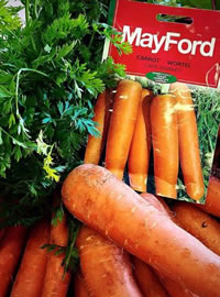 Mayford Carrots can have up to 7000 seeds per packet