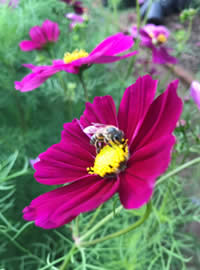 Our Cosmos patch is a buzz