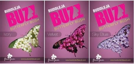 All NEW the dwarf Buddleja � BUZZ � Available in three different colours at Eckards