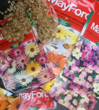 Seed - Colour the most economical way!