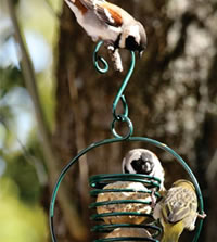 We have a wide selection of suet feeders