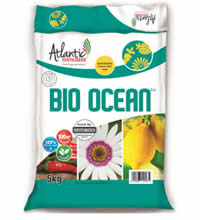 BioOcean encourages flowering for Roses