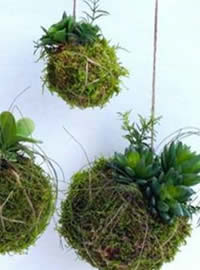 True kokedama inspiration
