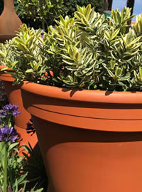 Clay pots help with moisture retention