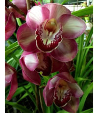 Feed your Orchids every alternate watering