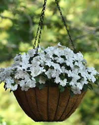 Great for hanging baskets and containers