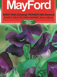 Look out for single colours of climbing sweetpeas