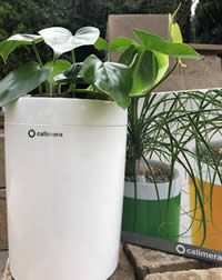 Stylish self watering containers