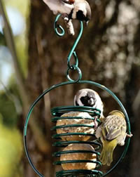 Eckards has a wide selection of suet feeders